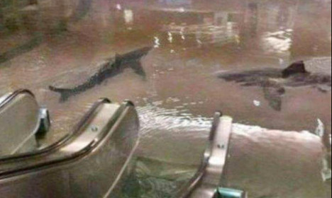 Sharks in Chatelet and Uber boats! Parisians see funny side of floods