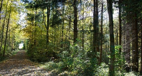 Man arrested in forest murder case