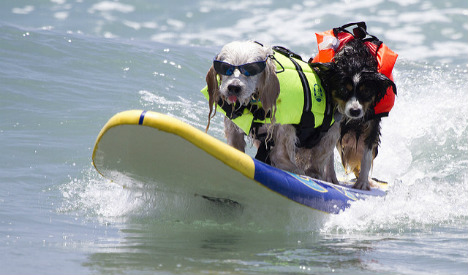 Surfs Pup! Barcelona opens its first dog-friendly beach