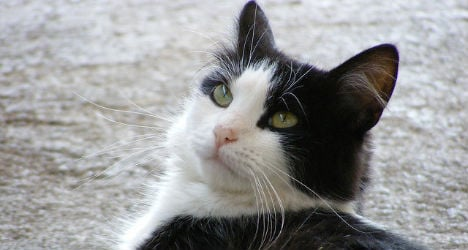 Over 50 cats go missing in Austrian town