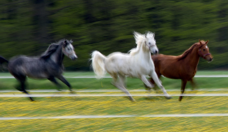 Renegade horse herd runs amok in small Saxon town
