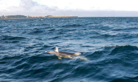 Watch: Nordic scientists get rare dolphin surprise