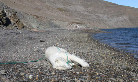 Russian scientist shoots and kills polar bear in Norway