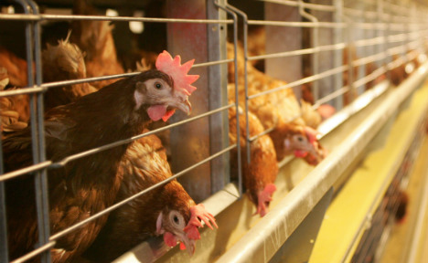 Aldi Nord makes first global cage-free egg pledge