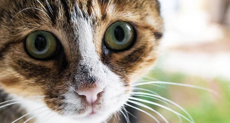 Swiss farmers offered cat castration vouchers