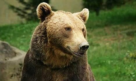 Swedish woman bumps into bear near pub