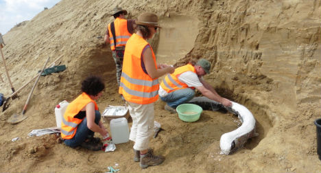 'Sensational' mammoth tusks found near Vienna
