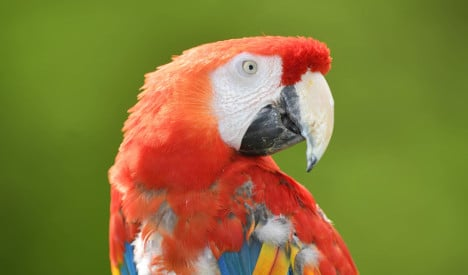 Worried neighbours alert police to parrot's cry for help