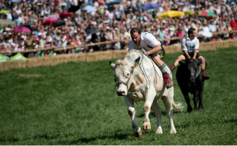 Germans race bulls too, but with a difference