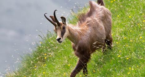 Swiss hunting season claims human lives