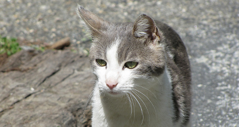 Missing Swiss cat turns up 600km away in Germany