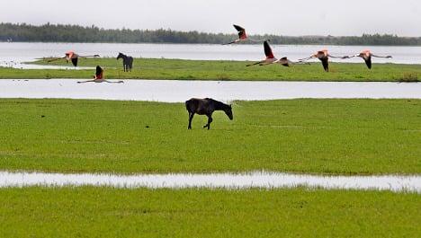 Spain's Doñana wetlands going dry, WWF warns