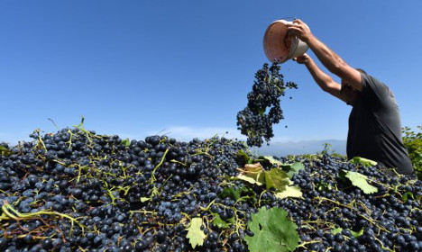 All you need to know about France's wine harvest