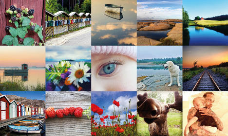 Seven of these will become Sweden's new stamps