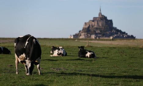 The 'most dangerous' animals you can find in France
