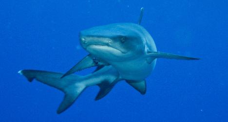 Swiss politician slammed for scoffing protected shark