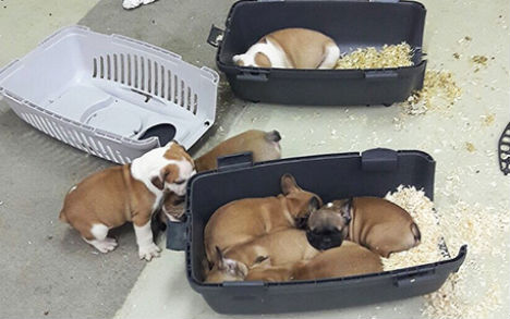 Austrian police rescue 47 puppies from animal smuggler