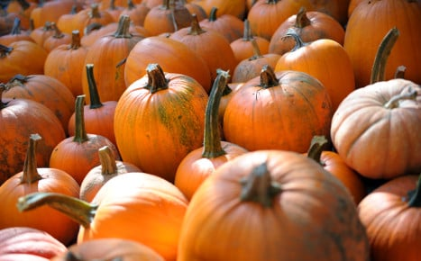 The rise and rise of the pumpkin in Germany