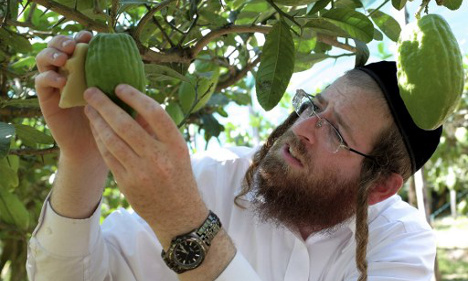 The Italian farmers cultivating an ancient Jewish tradition
