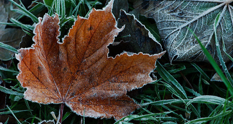 Winter is coming: first frost hits Swiss cities