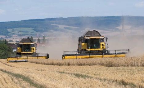 Intensive farming 'endangers a third of German species'