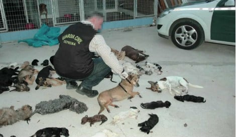 Spanish shelter head on trial for 'killing' over 2,000 animals