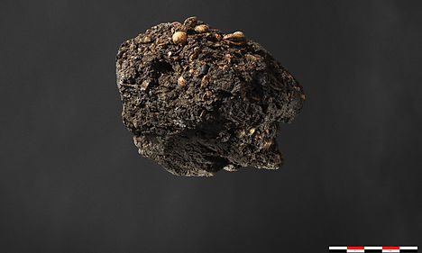300-year-old turd offers insight into Denmark's past