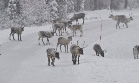 Inside Sweden's perilous Sami reindeer pilgrimage