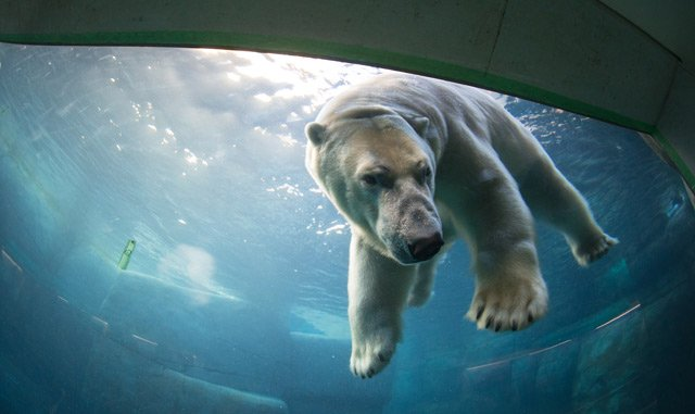 Polar bear to switch Danish zoos after 'divorce'
