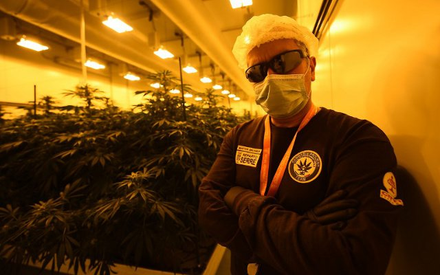 Marijuana, made in Italy: Inside the military police cannabis lab