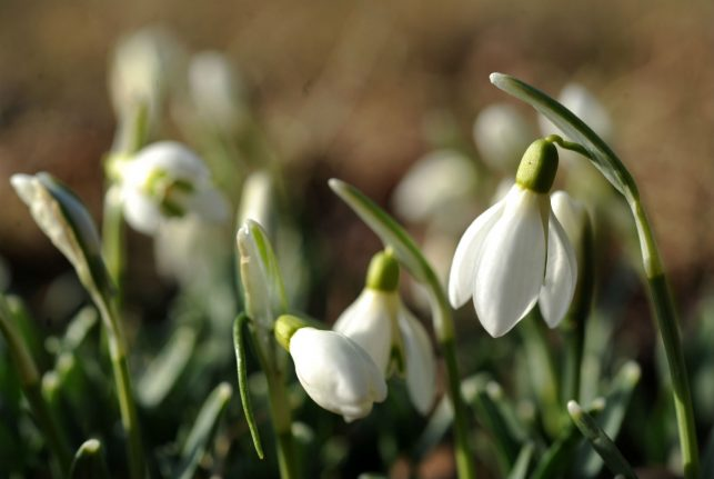 Spring likely delayed in Germany, despite warm February