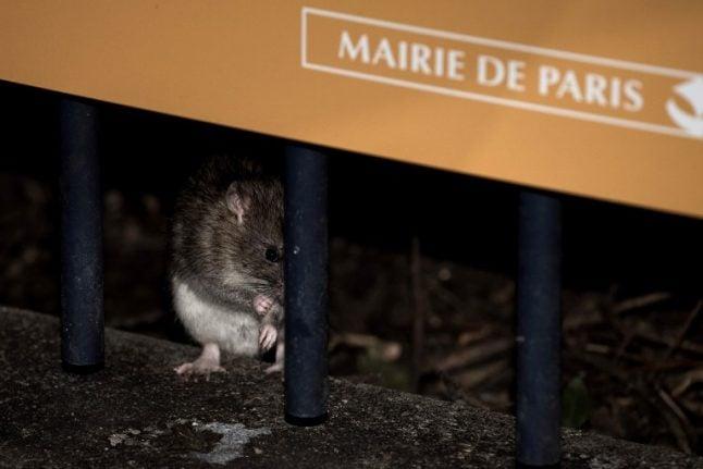 Draining Paris rat race prompts city's 'forgotten' rodent-hunters to strike