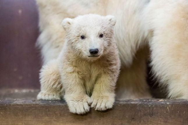 Berlin polar bear cub Fritz dies, sending animal lovers into mourning