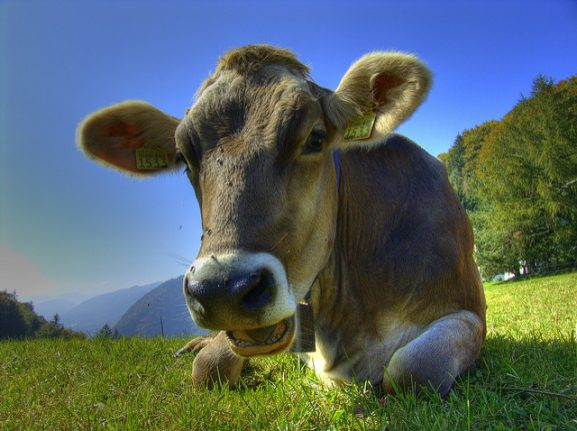 Man who threatened to kill cows loses high court appeal