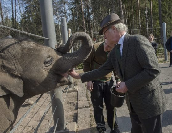 Royal elephant at Swedish zoo has deadly herpes virus