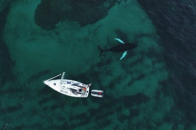 Video: Diver releases footage of Tromsø killer whales