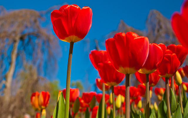 IN PICS: Ten stunning images of Switzerland in spring