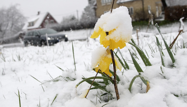 30cm snow in April? Please tell us you're joking, Sweden!