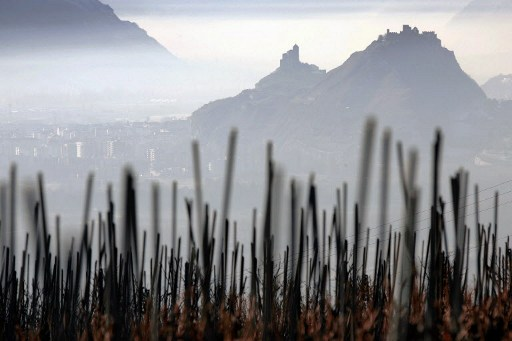 Frost proves catastrophic for Swiss winegrowers