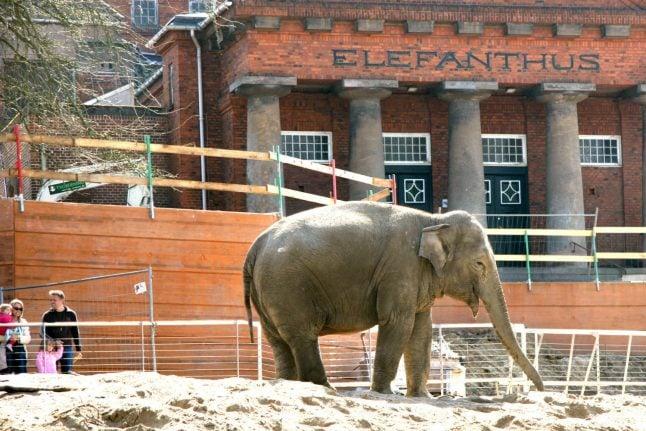 Iconic Copenhagen zoo elephant house to be demolished