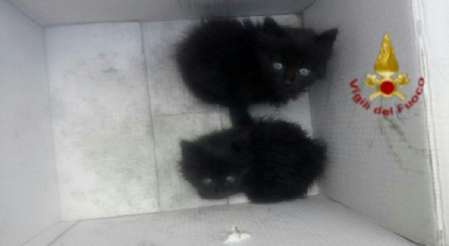 Firefighters rescue kittens who survived massive waste depot fire south of Rome