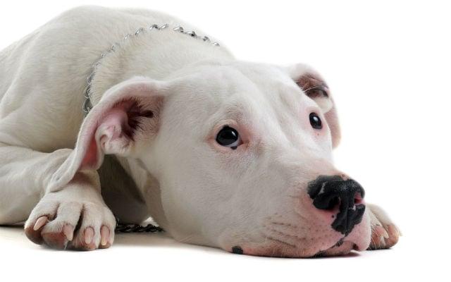 Italians rally to rescue Denmark death-row dog