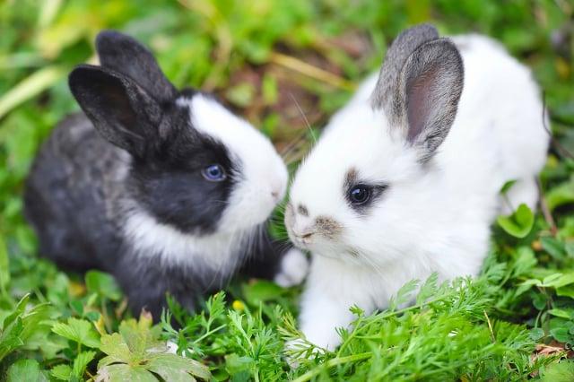 Rabbits suffer cruel death after being left in Geneva bin