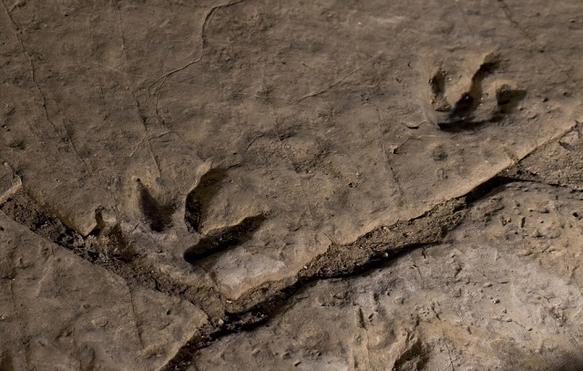 Traces of new dinosaur discovered during construction of Swiss motorway