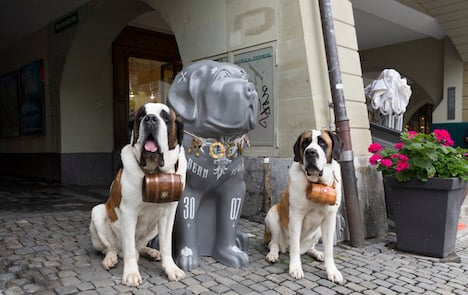 Saint Bernard dogs overrun Swiss capital
