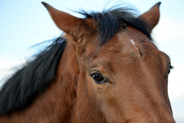 Berlin-Hamburg train line closed after horse gets hoof stuck in track