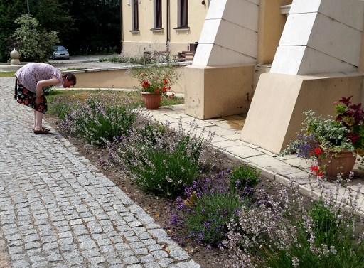 Switzerland helps create 'garden therapy' centre in Poland