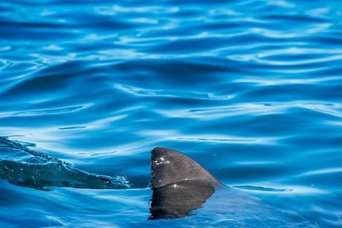 Beaches closed in Mallorca amid shark fears