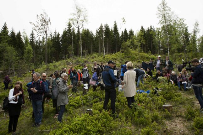 In a Norwegian wood, a 22nd century library grows