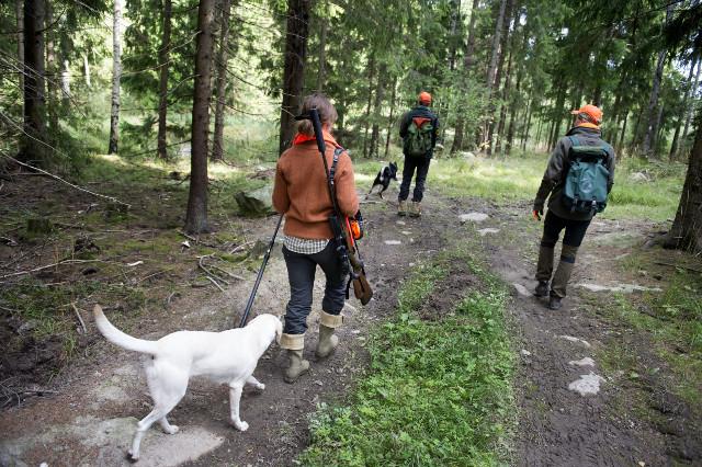 Growing number of Swedish women take up hunting